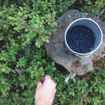 scandinavian feeling hygge picking blueberries nature