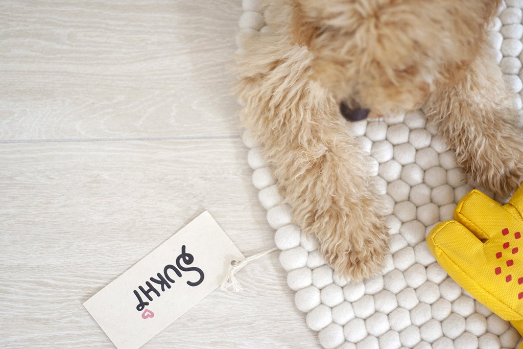 sukhi interior rug floor puppy