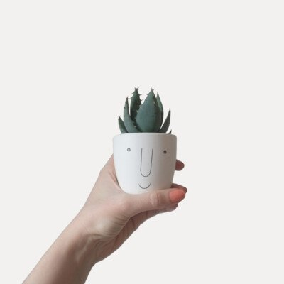 happiness smile succulent