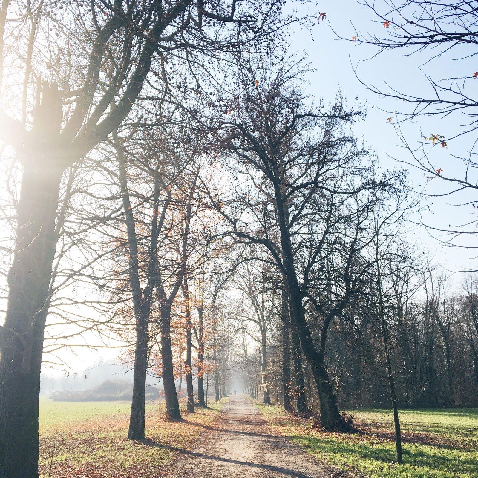 autumn hygge list foggy morning walk