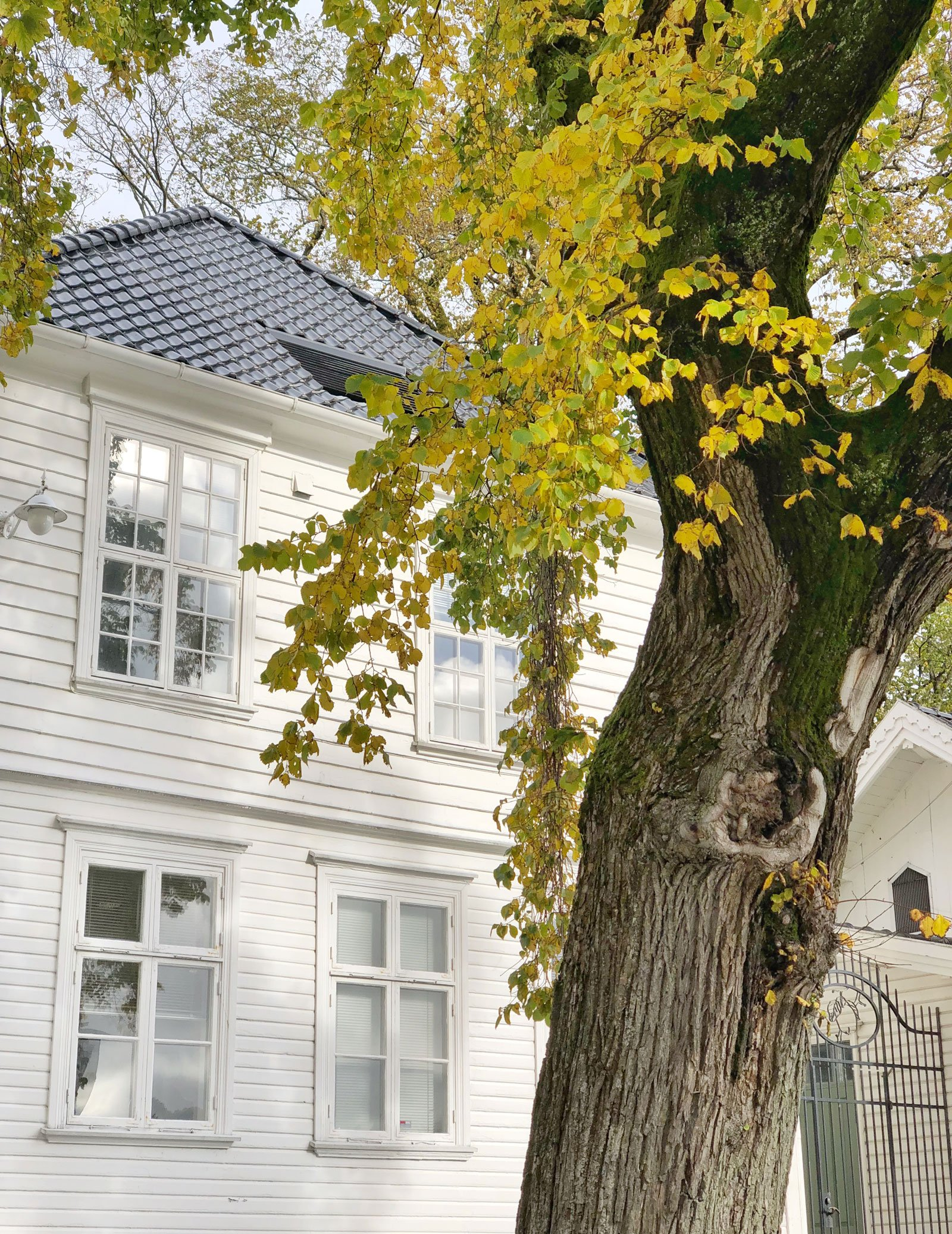 stavanger autumn leafs colours